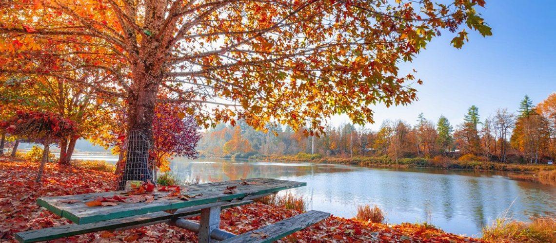 Startbild_Herbst